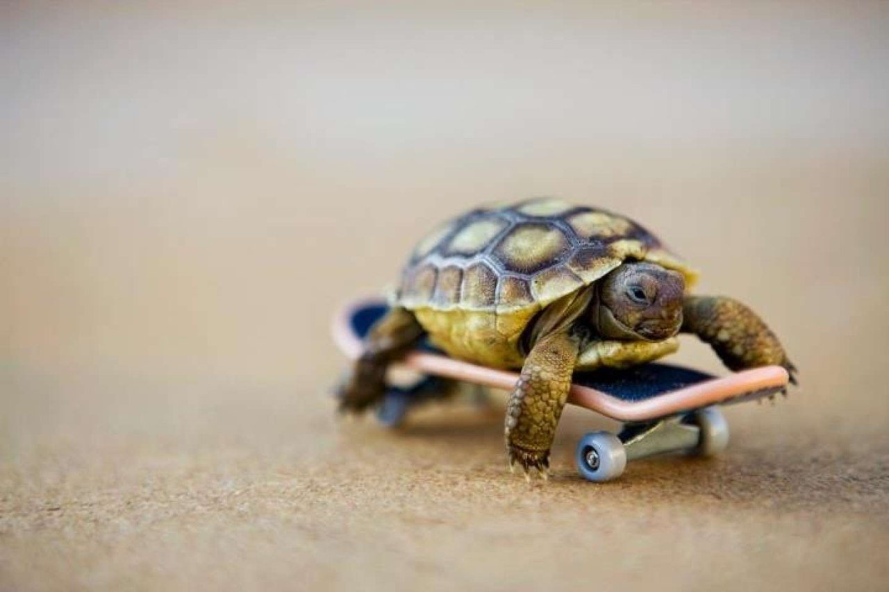 Прикольные картинки про черепаху