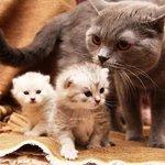 Интересные особенности и любопытные факты о кошках