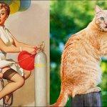 Коты пародируют девушек