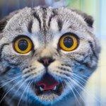 28 вопросов и ответов о котах.
