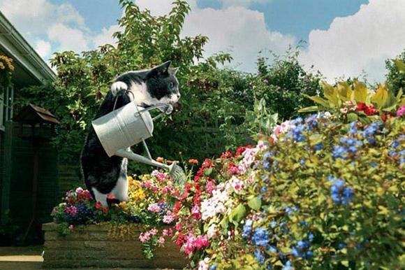 Вот он, вот он самый идеальный кот в мире