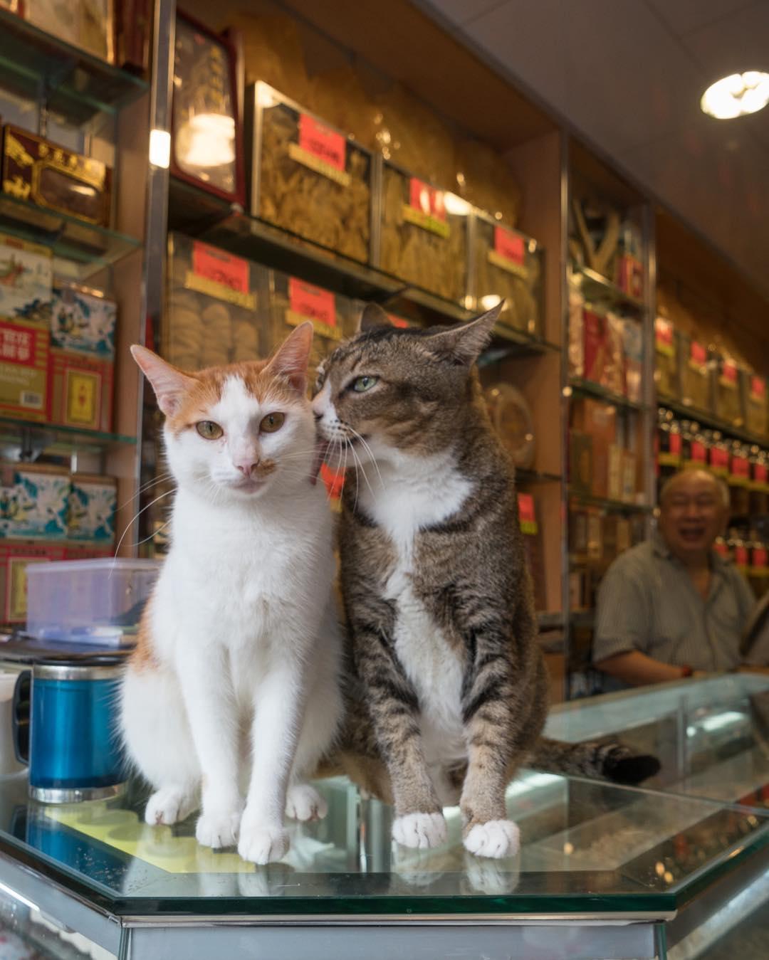 Котики в магазинах