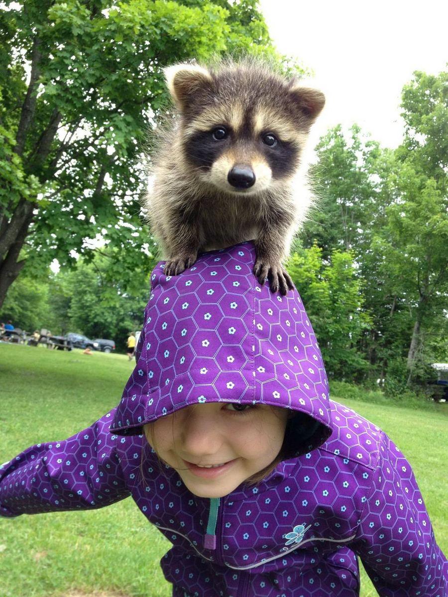 Смешные картинки животных детские