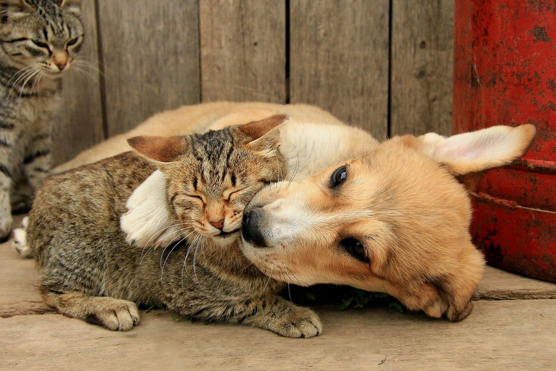 дебе вы целуете своих домашних животных фото приносит