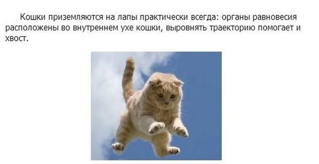 Интересное про котэ в картинках
