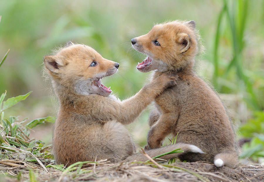 Животные фото прикольные, картинки зверят