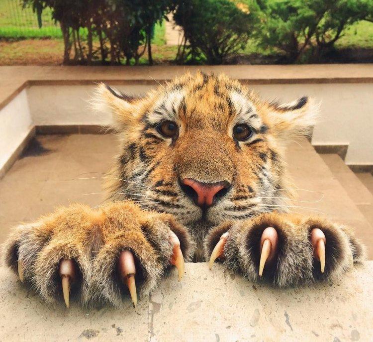 Животные на фото, милые и смешные