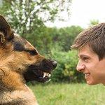 Прикольный Анекдот из жизни. Ненавистникам собак на заметку.