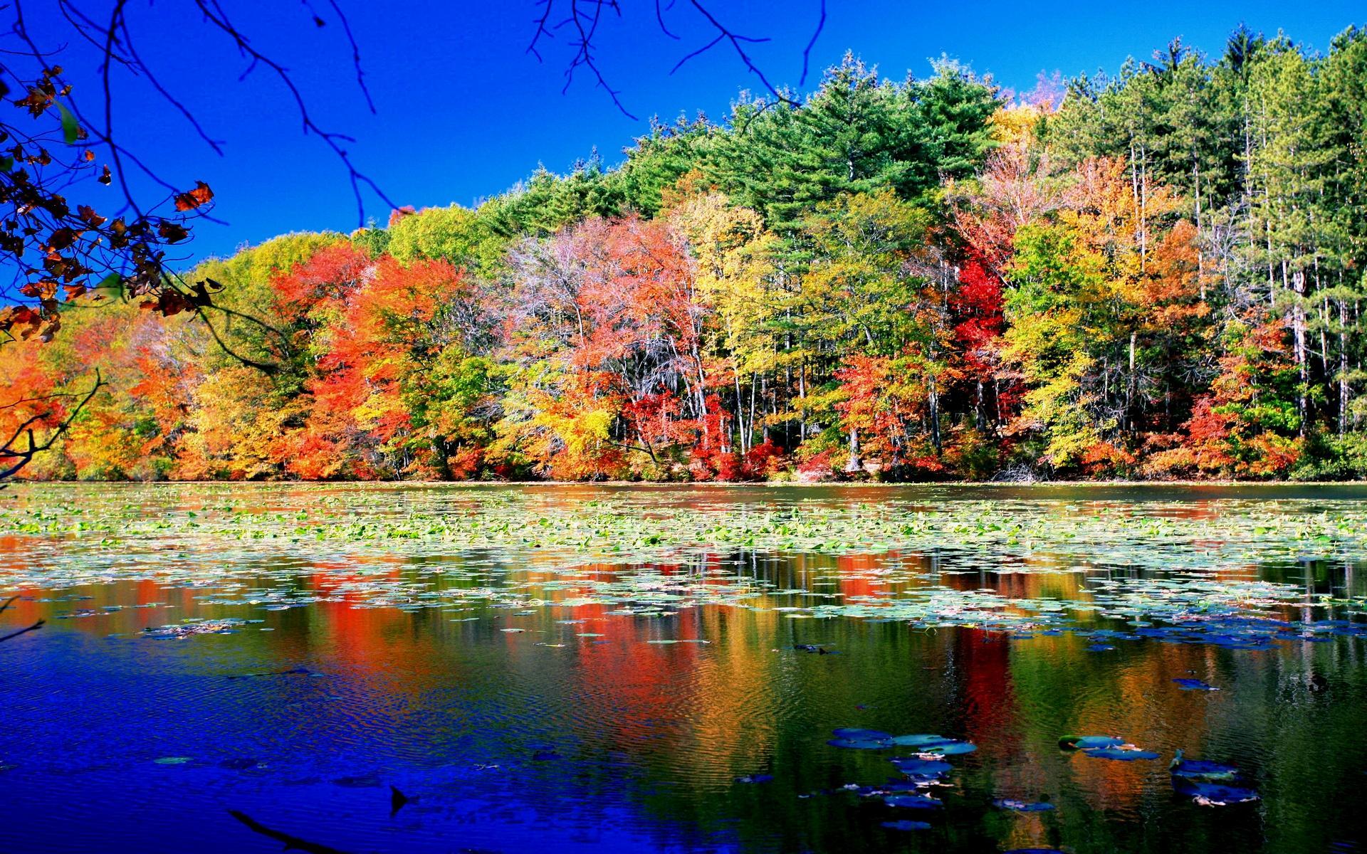 Яркие краски природы картинки для