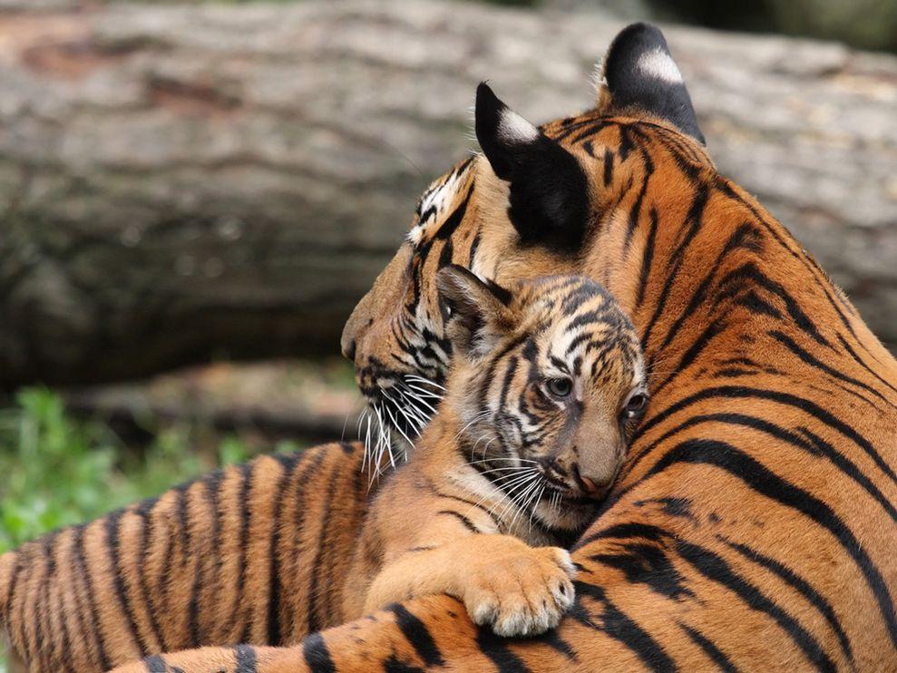 Красивые и прикольные фото животных