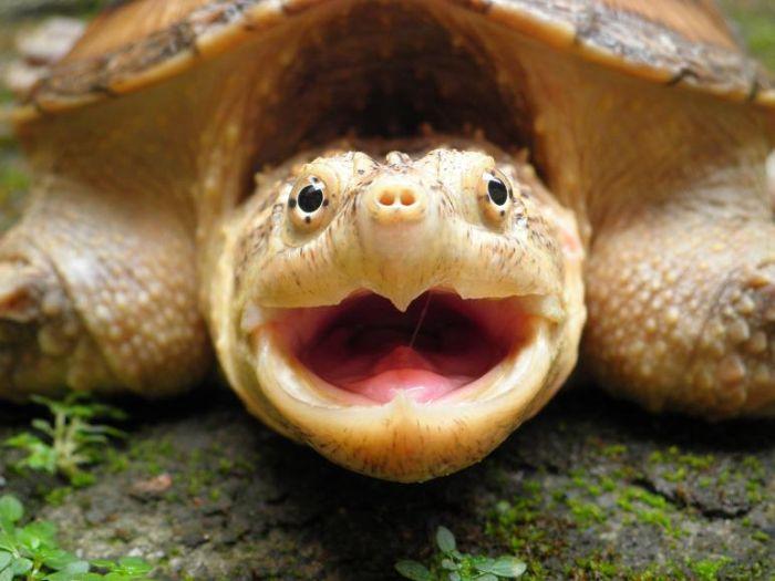 Смешная картинка черепашки