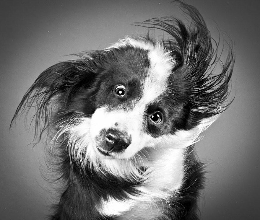 Прикольные мордашки собак