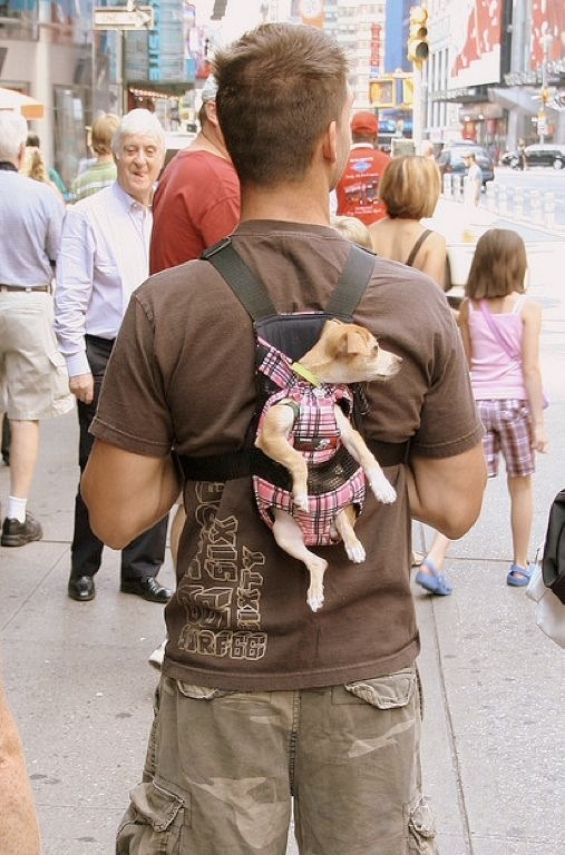 Фото с животными смешные и прикольные