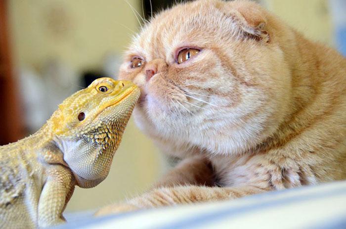 Смешные фотографии разных животных