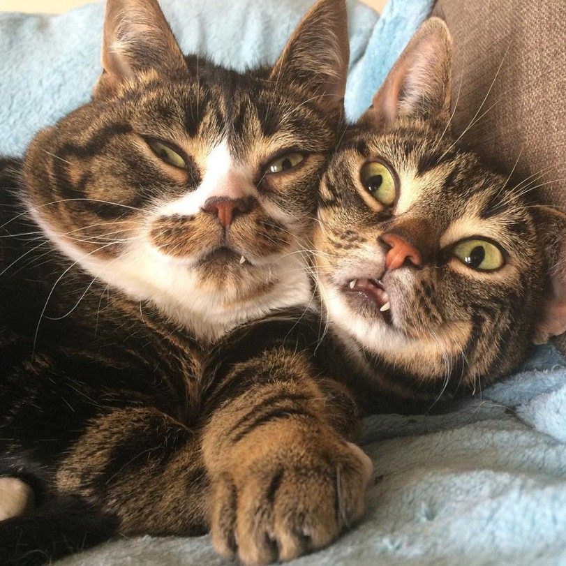 Приколы с кошками, смешные животные