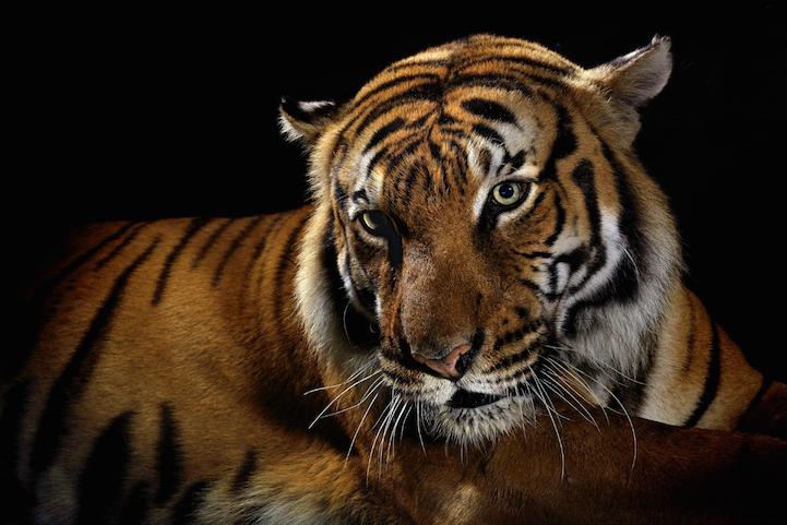 Фотосессия животных для National Geographic