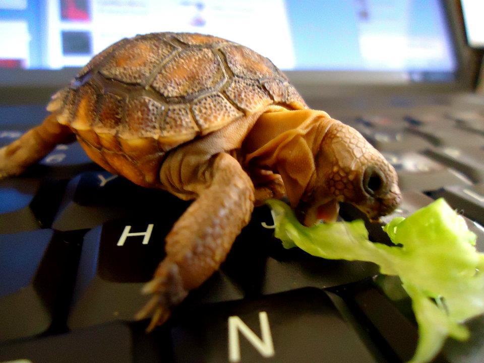 Картинка черепаха прикольные