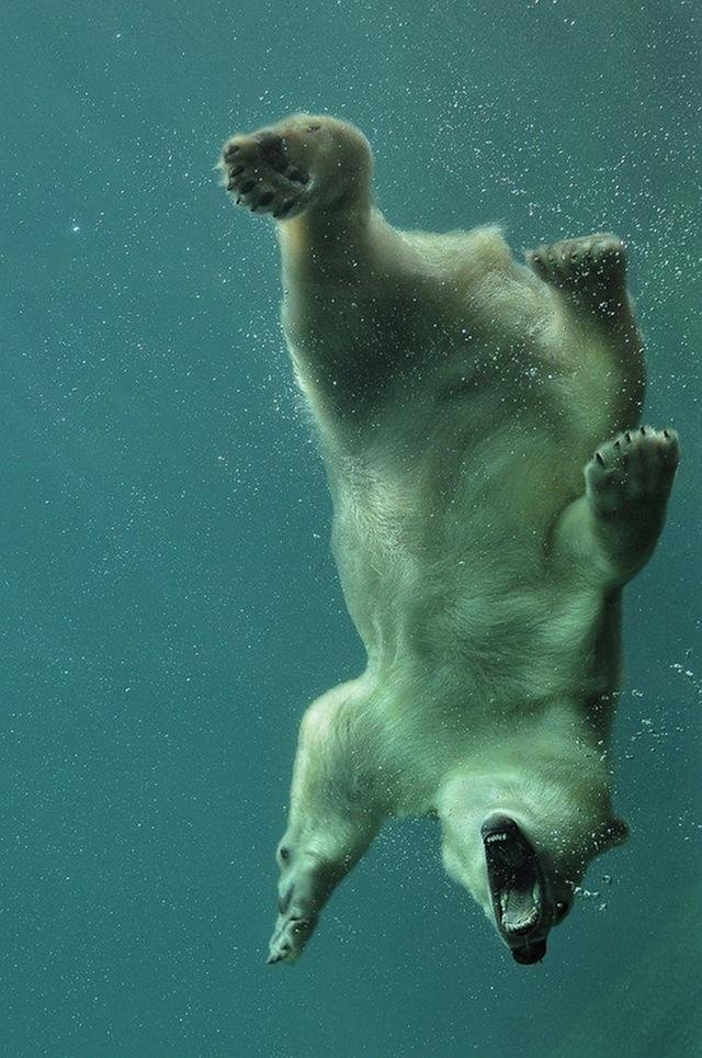 Животные в воде и под водой