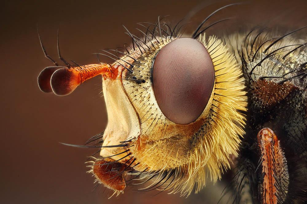 Мир макро, насекомые фото