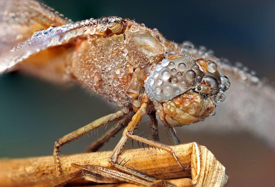 Красивые макро снимки насекомых после дождя