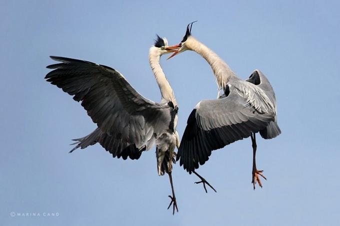 Фото животных. Мир дикой природы