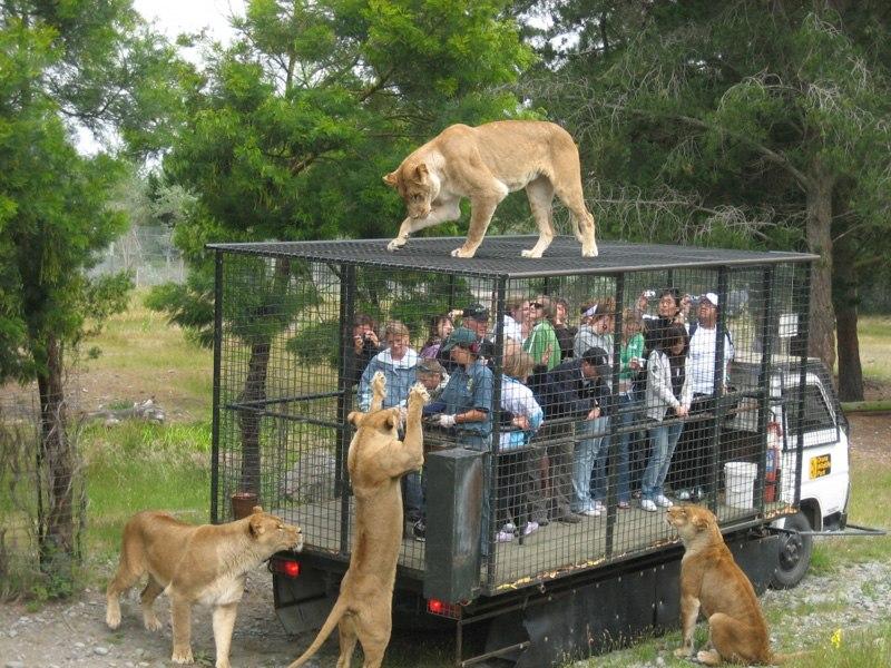 Приколы с животными, кошек почти нет