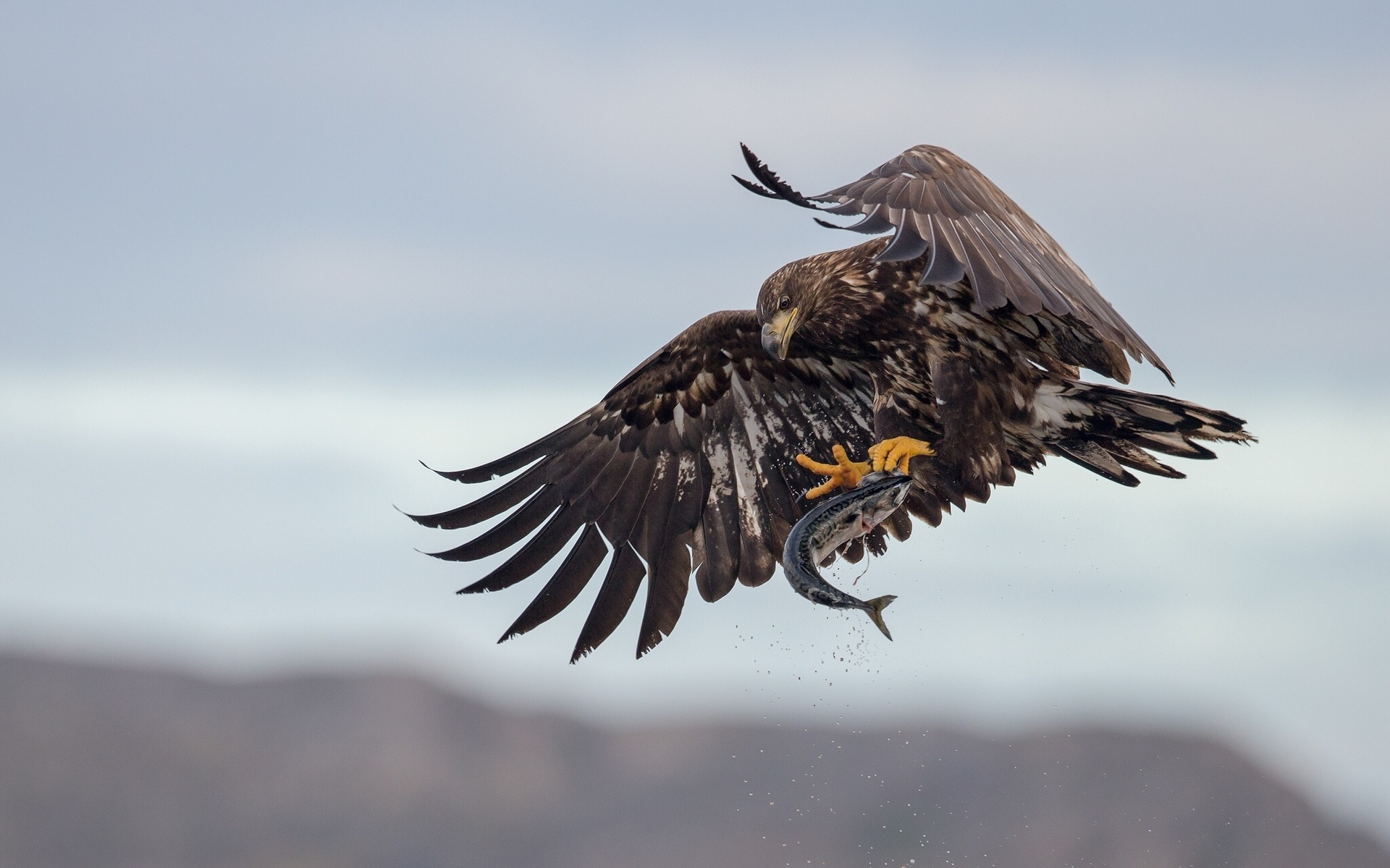 Фото птиц в полете и с добычей