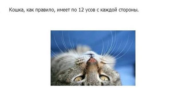 Интересное о кошках, заключительная часть