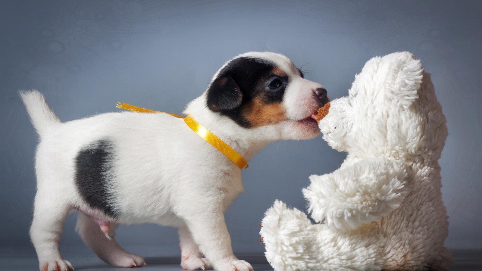 Собаки как игрушки