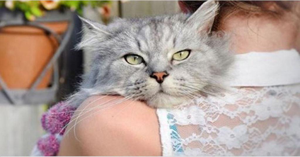 Полезные советы тем, кто решил завести кошку