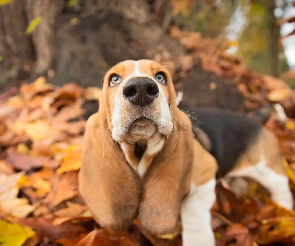 Собаки и осень на фото