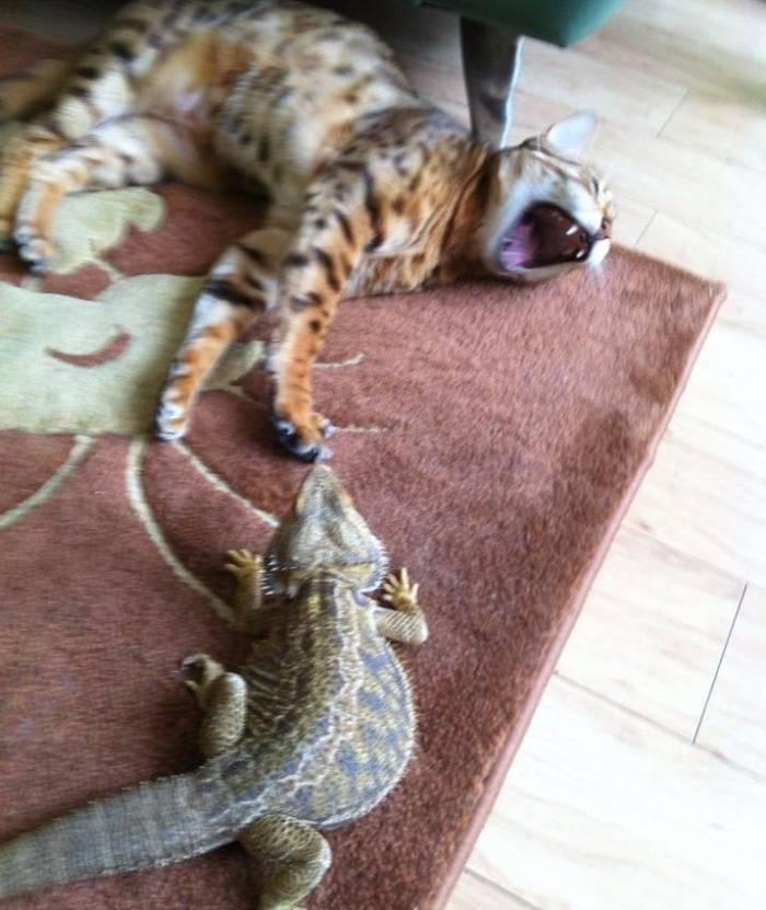 Приколы с животными, смешные фотки