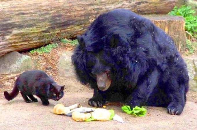 Кошка и медведица