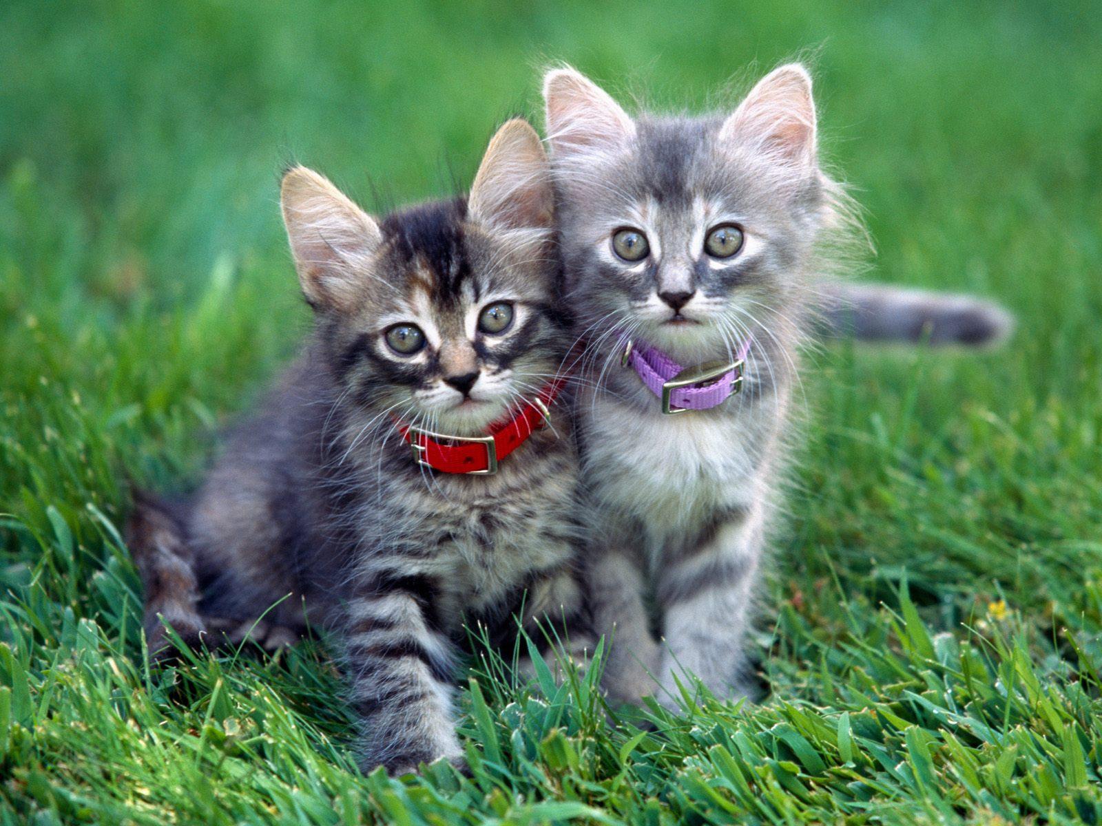 Красивые фотографии кошек и котят
