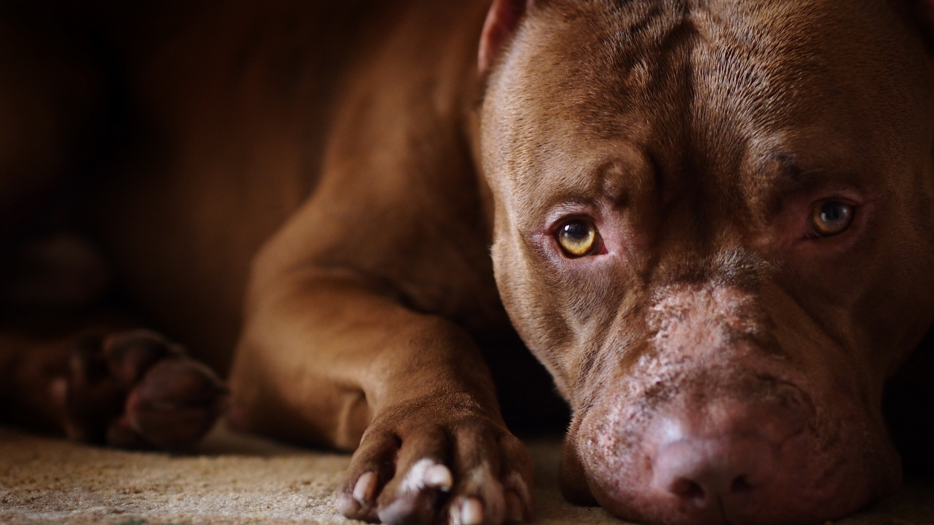 Красивые псы