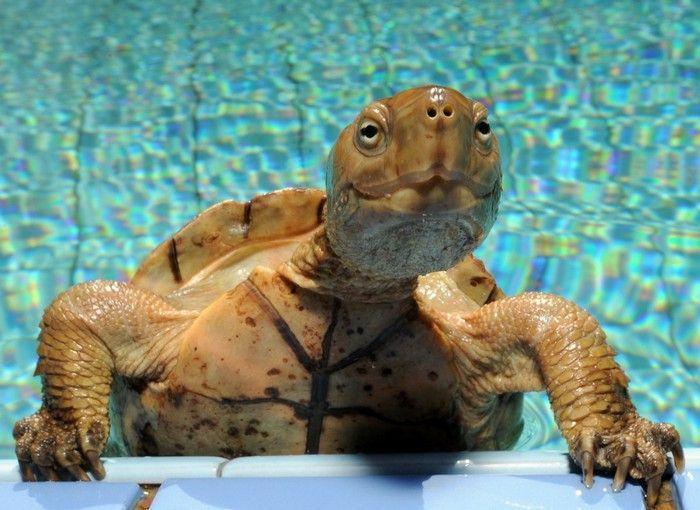 Черепаха прикольная картинка