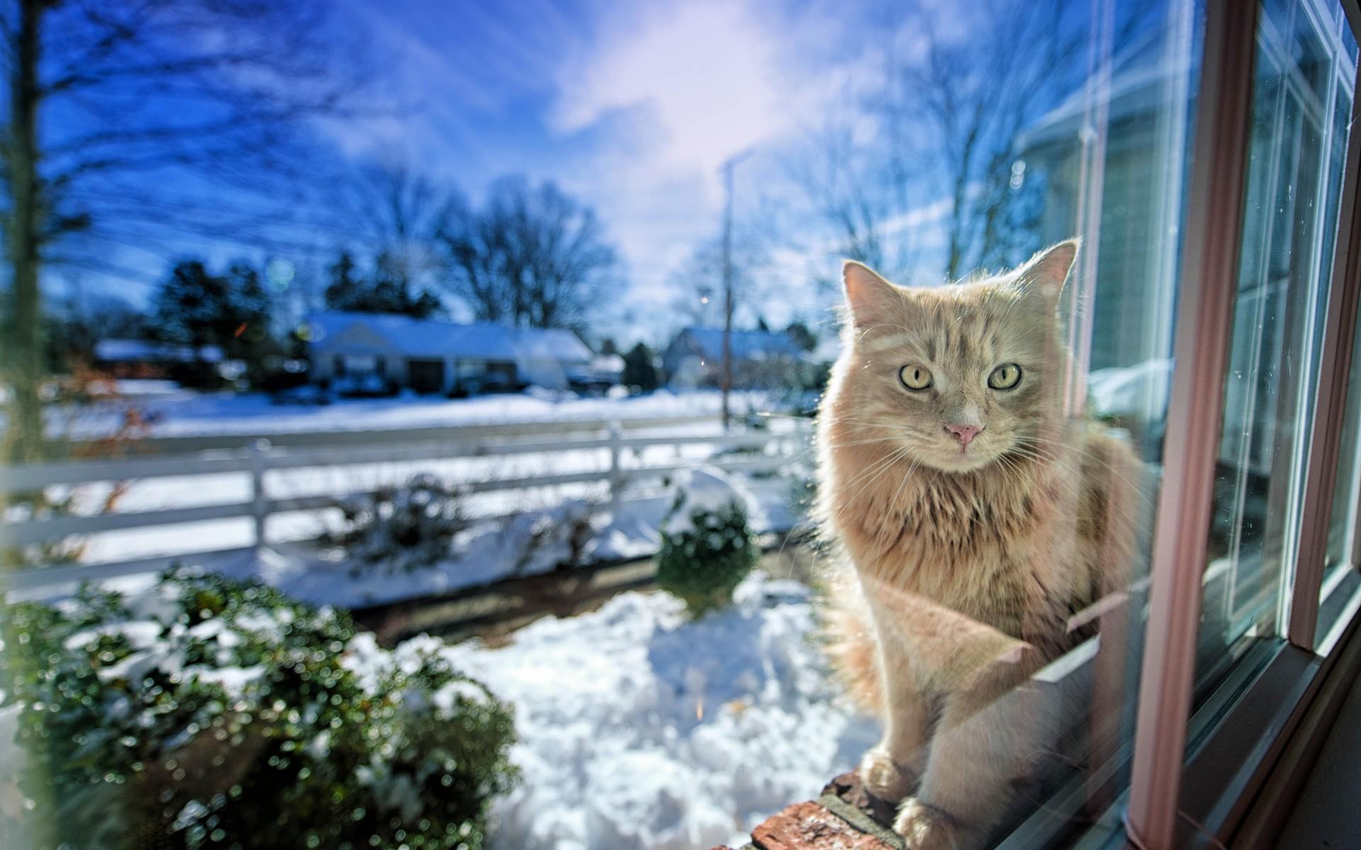 Зимние коты