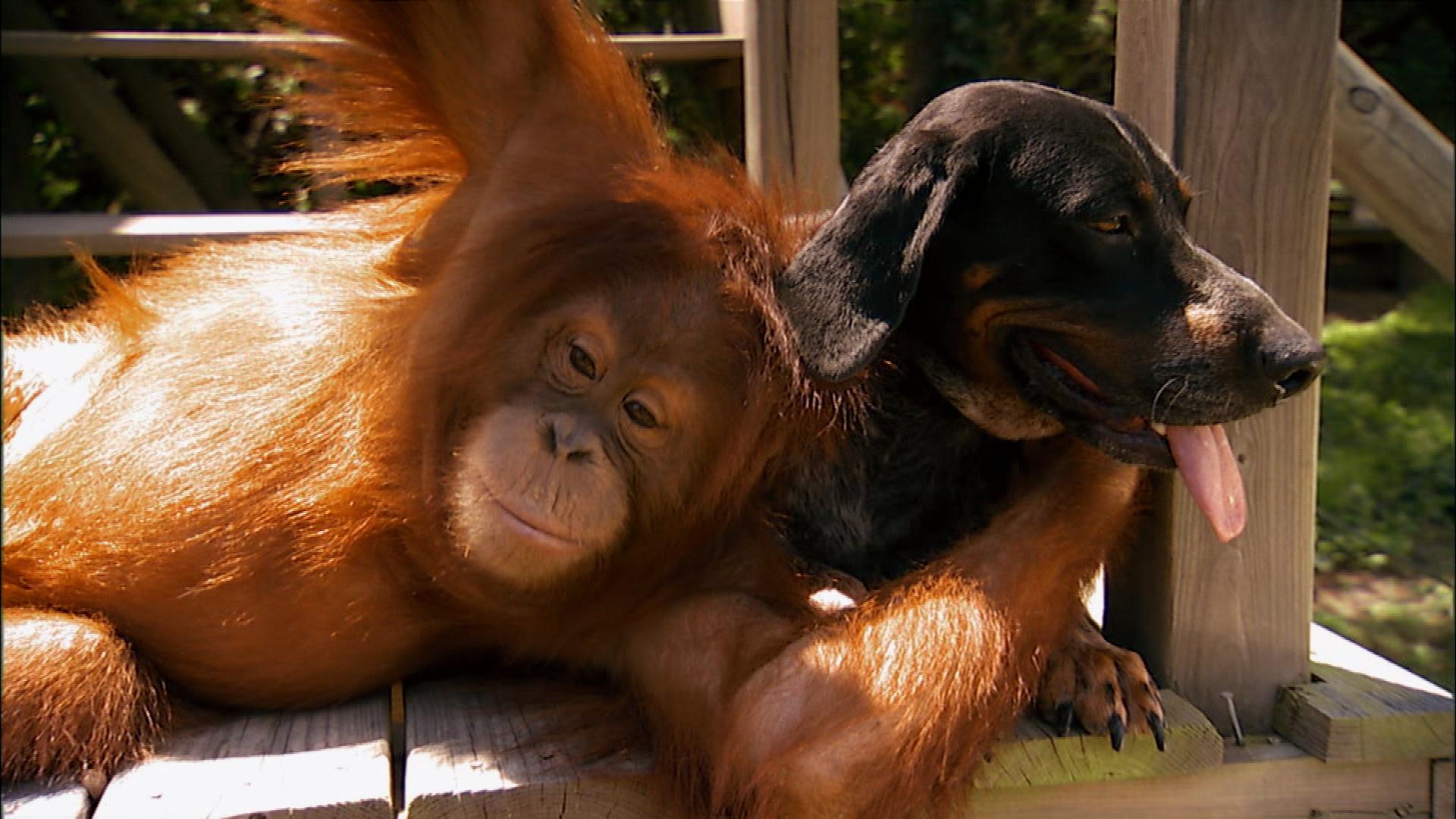Прикольные фото разных животных