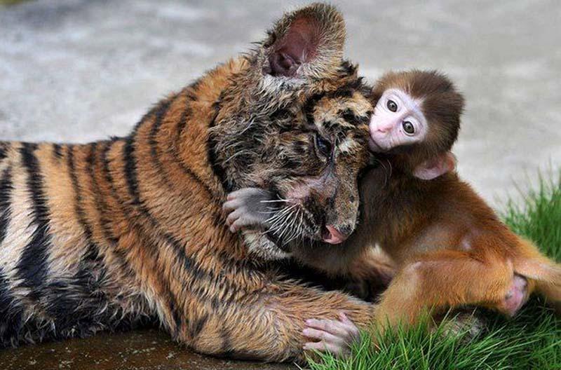 Смешные и просто красивые фото разных животных