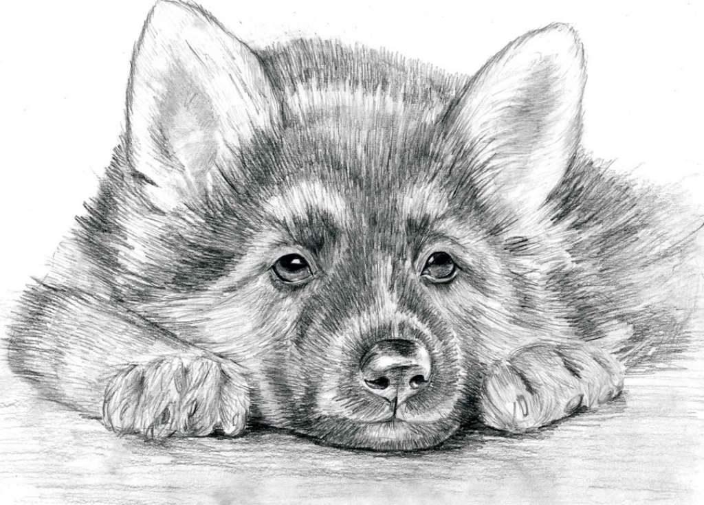 Собака карандашом