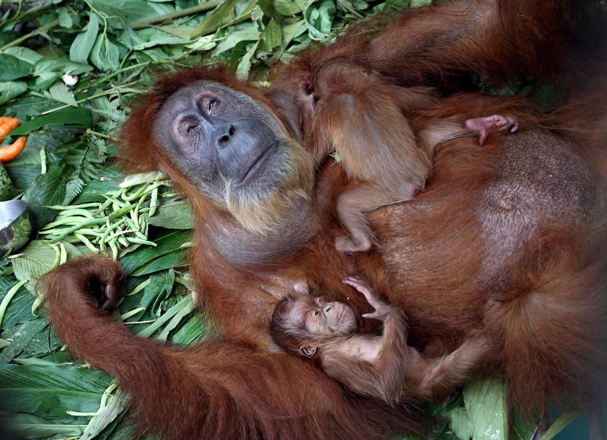 смешные фото и картинки мам с детенышами возникает внезапно