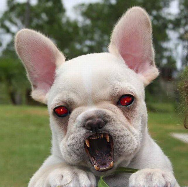 Страшные животные фото