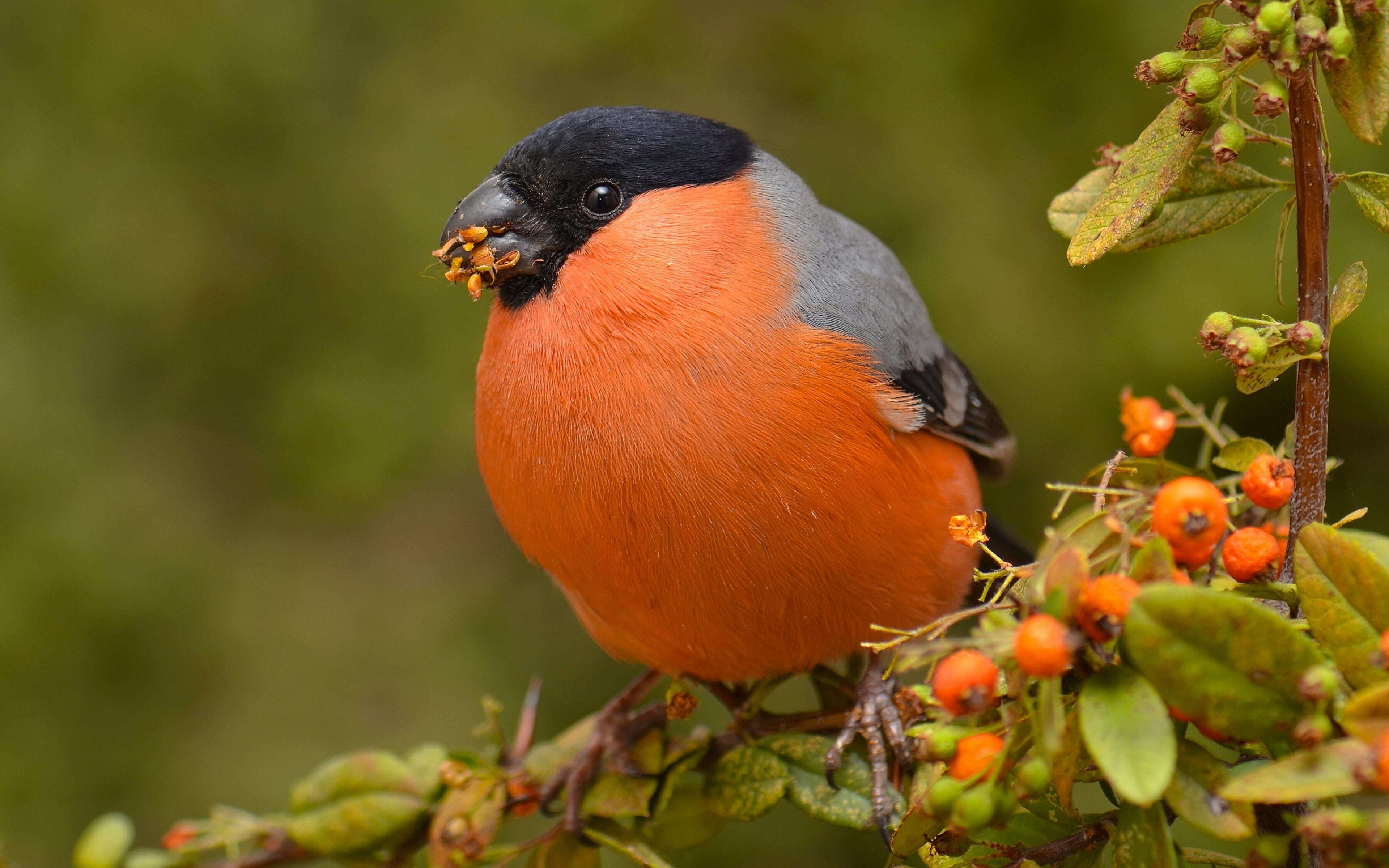 Картинки маленьких и красивых птиц