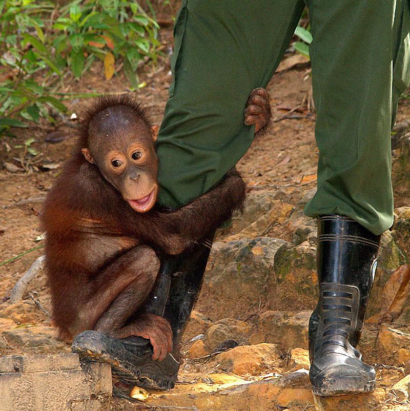 Животные, прикольные фотографии зверья