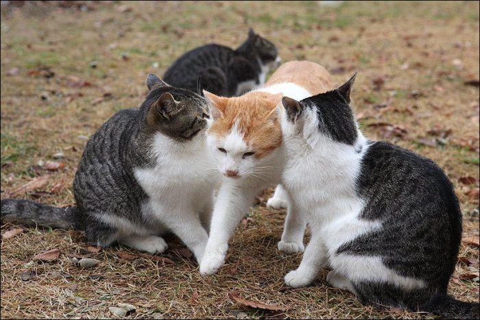 Любовь по-кошачьи
