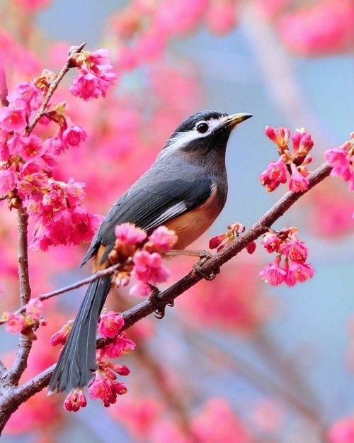 Смешные животные и прикольные птицы