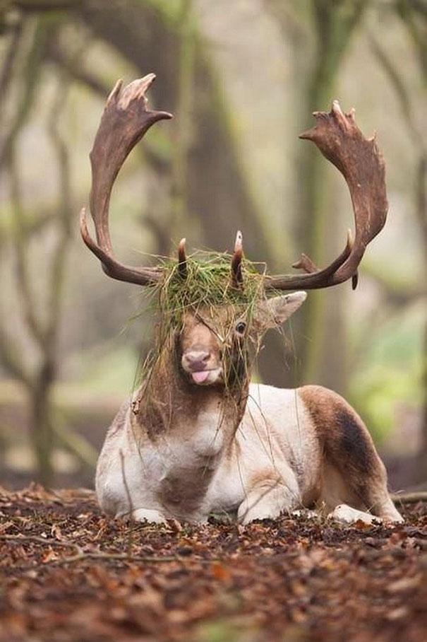 Картинки с животными смешные