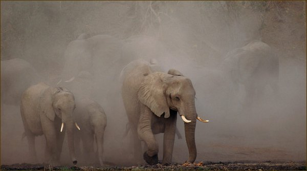 Саванна дикие животные фото