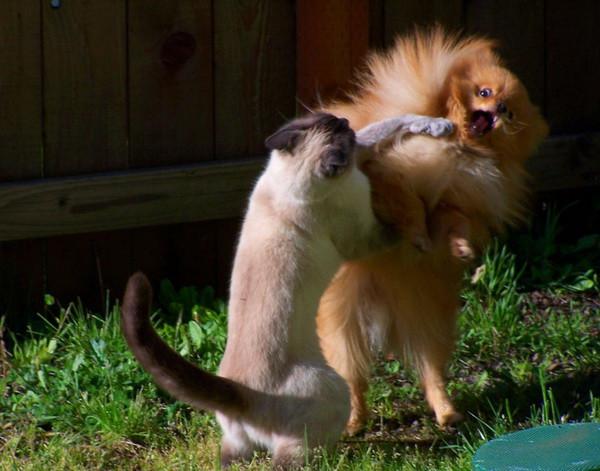 Приколы с животными, картинки зверей
