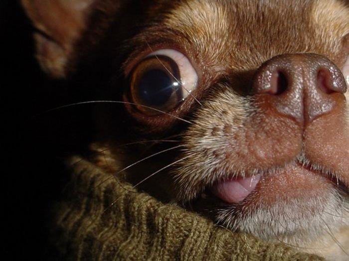 Фотографии прикольных животных